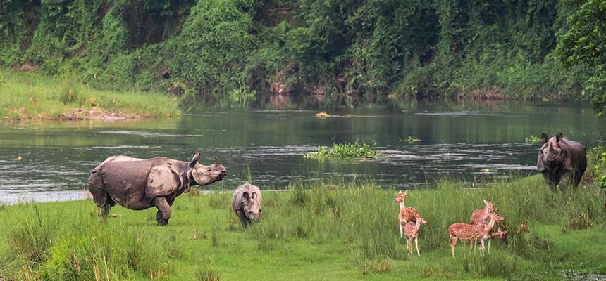 Chitwan National Park Tour - Himganga Treks and Expedition